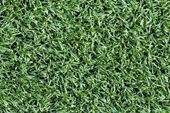 Grön gräsmatta för bakgrund abstrakt sikt för textur för park för lawn för green för bakgrundsstadsgräs Överkant v royaltyfri bild