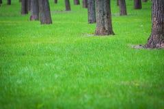 Grön gräsmatta för vår bland träden Arkivbilder