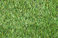Grön gräsmatta. Gräs Royaltyfria Foton
