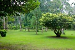 Grön gräsmatta i ett tropiskt parkerar royaltyfria foton