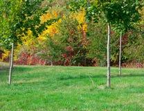 Grön gräsmatta i höst Royaltyfri Foto