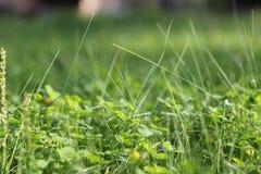 Grön gräsmatta med att svälla ut forsar royaltyfri foto