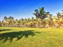 Grön gräsmatta med palmträd goa Arkivfoto
