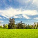 Grön gräsmatta med träd Arkivfoto