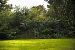 Grön gräsmatta med träd parkerar in under soligt ljus Arkivfoto