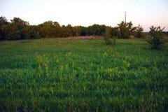 Grön gräsmatta nära skogen i sommarafton royaltyfri foto