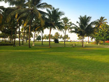 Grön gräsmatta och palmträd Royaltyfri Fotografi