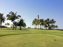 Grön gräsmatta och palmträd Arkivbilder