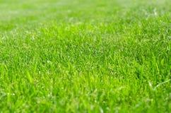 Grön gräsmattagård Arkivfoto