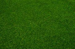 Grön gräsmodell Royaltyfria Bilder