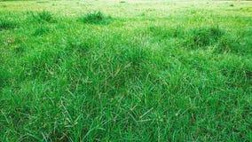 Grön gräsnaturbakgrund fotografering för bildbyråer