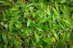 Grön grästextur Royaltyfria Bilder