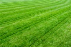 Grön grästextur Royaltyfria Foton