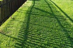 Grön grästextur för bakgrund Royaltyfri Bild