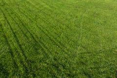 Grön grästextur för bakgrund arkivfoton