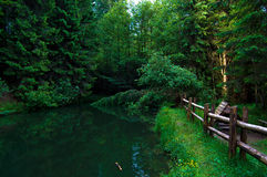 Grön grön skog i Carpatian Fotografering för Bildbyråer