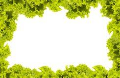 grön grönsak Arkivfoto