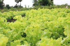 grön grönsak Royaltyfria Bilder