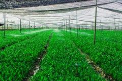 Grön grönsaktäppa Arkivfoto
