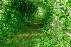 Grön grönsakväxttunnel Royaltyfri Bild