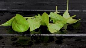 Grön grönsallat, beta och körsbärsröda tomater faller på en våt svart tabell, lager videofilmer