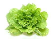 grön grönsallat för smör Fotografering för Bildbyråer
