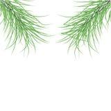 Grön gran förgrena sig. Vektorillustration Vektor Illustrationer