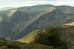 Grön gran på bakgrunden Royaltyfri Fotografi