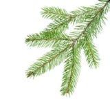 Grön granfilial för garnering Royaltyfria Bilder