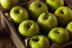Grön Grannysmed Apple arkivfoton