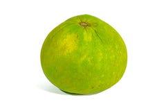 Grön grapefrukt Arkivbild
