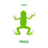 Grön groda Royaltyfri Foto