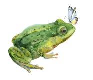 Grön groda för vattenfärg med den blåa fjärilen Royaltyfri Foto