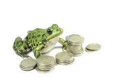 Grön groda med pengar Arkivbilder