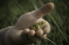 Grön groda på handen Royaltyfri Fotografi
