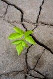 grön grodd Arkivfoton