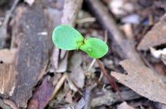 grön grodd closeup Royaltyfria Bilder