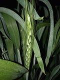 grön grov spik arkivfoton