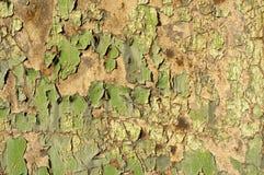 grön grunge Royaltyfria Bilder