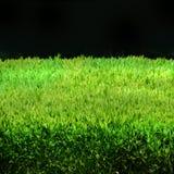 grön häck Arkivbilder