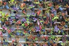 Grön hängning för dekorativa växter på väggen arkivbild