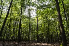 Grön härlig skog Arkivbild