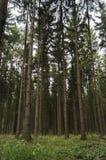 Grön härlig skog Fotografering för Bildbyråer