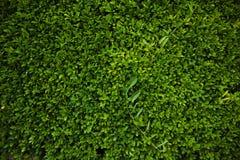 Grön härlig tapet Royaltyfria Foton