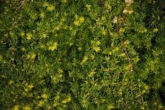 Grön härlig tapet Arkivbilder
