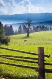 grön häst för fält Royaltyfri Bild
