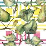 Grön höstbladbjörk Blom- lövverk för bladväxtbotanisk trädgård Seamless bakgrund mönstrar stock illustrationer