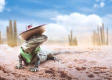 grön hatt isolerad mexikansk sombrero royaltyfria foton