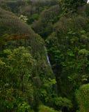 grön hawaii djungel royaltyfria bilder