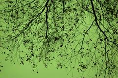 Grön himmel. Arkivfoton